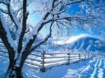 Tree_in_snow1