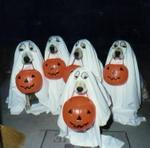 Dogs_trick_or_treating